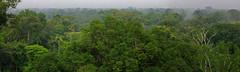 Green ocean - Amazonian jungle along Río Napo in eastern Ecuador.