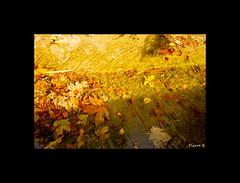 Rides d'automne