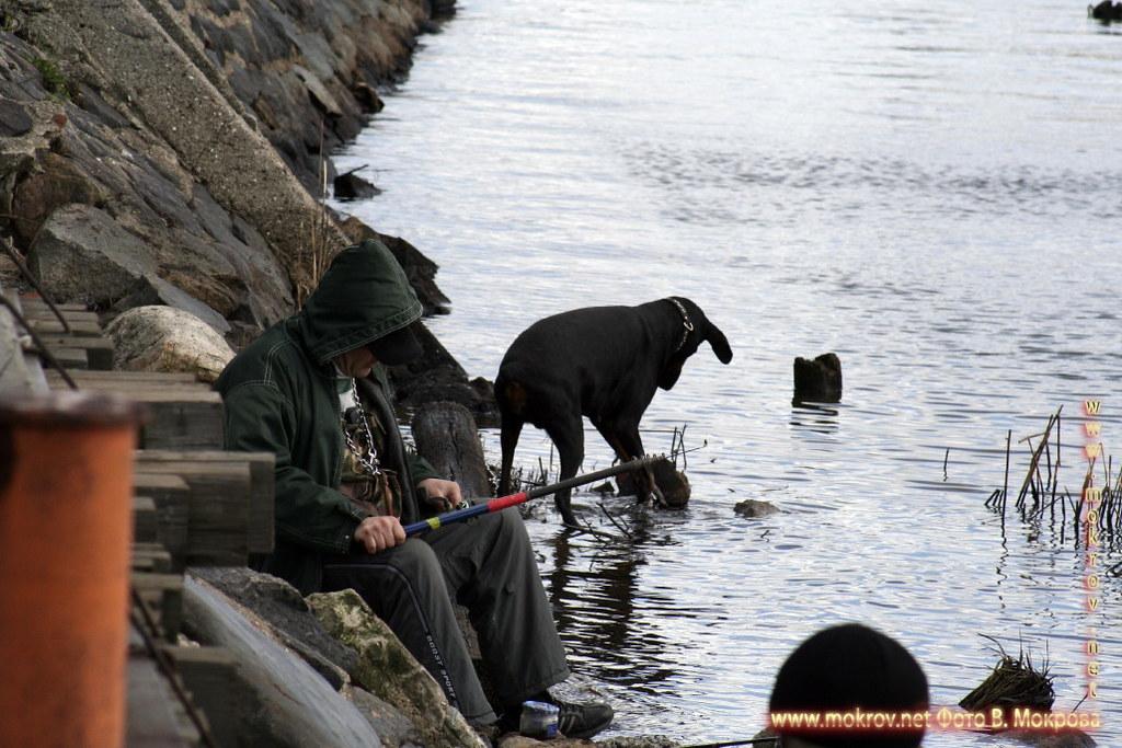 Калининградский морской торговый порт.