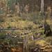 Quiet in the marsh