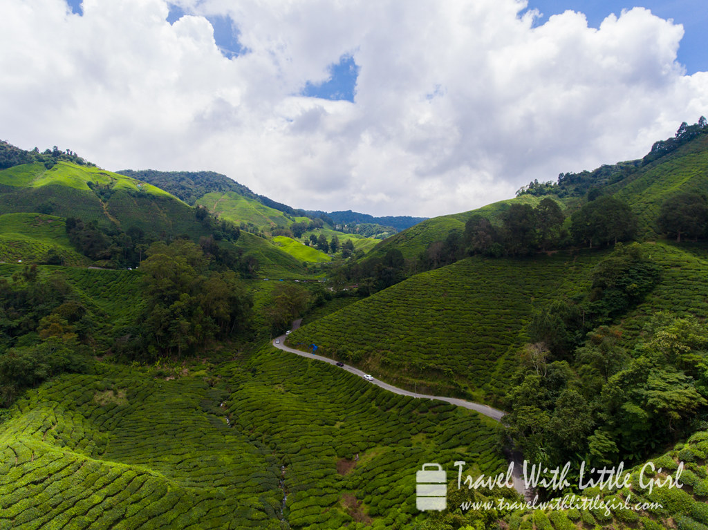 An aerial view of the tea plantation