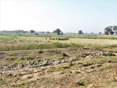 i-Bundi-Pushkar-route (18)