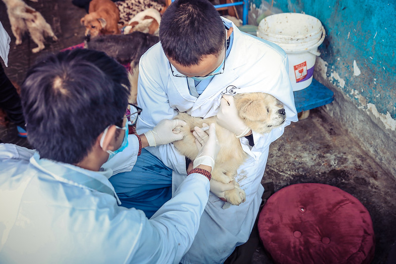Volunteer vets help vaccination for dogs in Qiming Animal Protection Center, Nov 19th, 2017-small