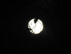 Supermoon Abstracts (1)