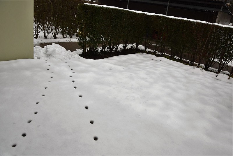 Mysterious footprints in the snow 11.12 (1)