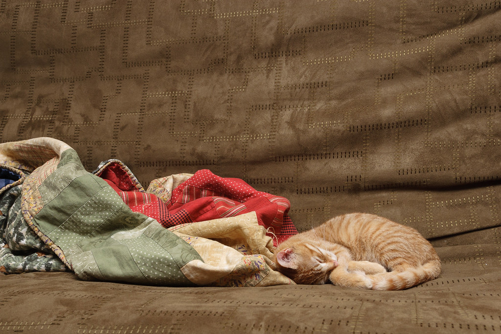Our cat Sam sleeping on the couch next to some blankets