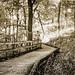 Solo sepia stroll by GJosephT