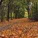 Autumn Path 077 by saxonfenken