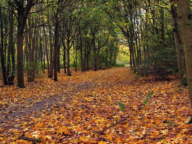 Autumn Path 077