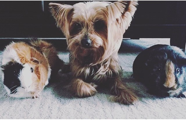 Muffin, Brownie & Boogie