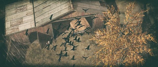 Birds & Barn