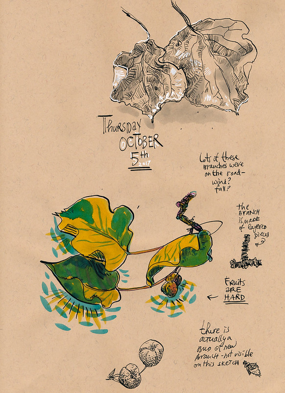 Sketchbook #109: Treasures