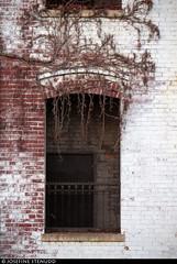 20161227_08 White overgrown brick building   Williamsburg, Brooklyn, New York City