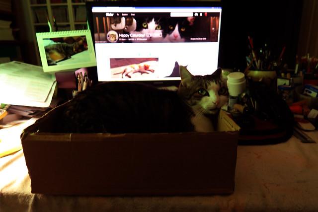 Ellen in the box