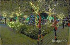 Botanical Lights
