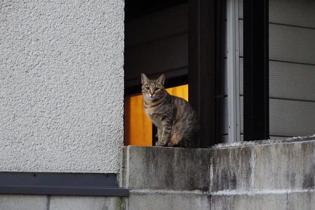 Today's Cat@2017-11-28