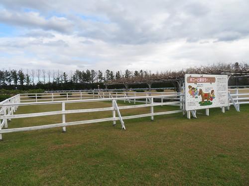 金沢競馬場の内馬場のポニーリンク