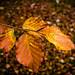 Leaves on leaves - LR6-310512-web