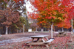 Walton Park - Fall Color