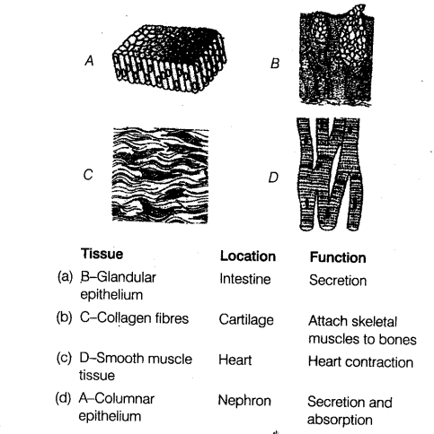 neet-biology-chapter-wise-mock-test-structural-organisation-in-animals-115