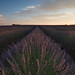 Purple Sunset by MrBlackSun