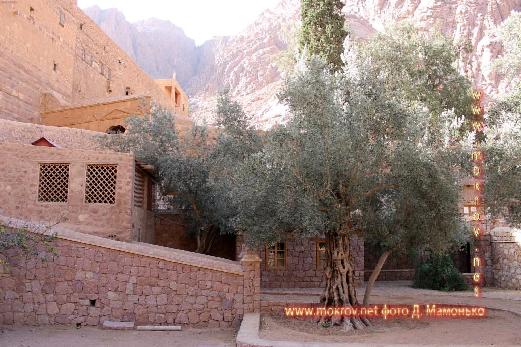 Синайские горы с фотокамерой прогулки туристов