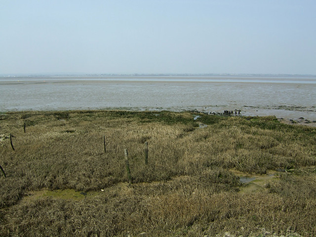 The Blackwater Estuary