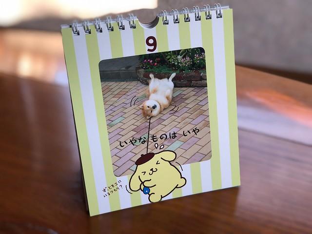 ポムポムプリン 柴犬 まる 柴犬まる×ポムポムプリンのハッピー日めくり