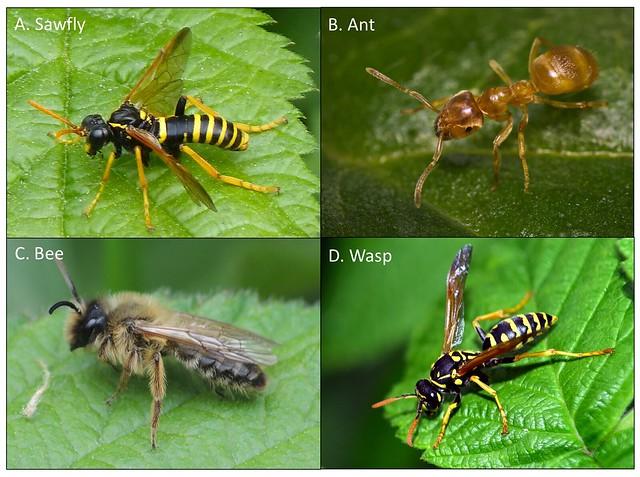 2017-11-26-Wasps-BROADLEY-Figure1