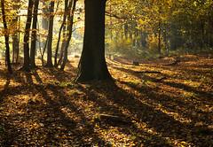 Latton Wood 2