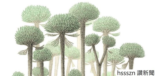 First-trees_820_403
