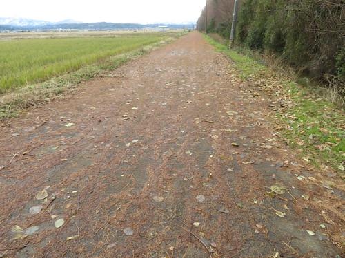 金沢競馬場の裏の並木道
