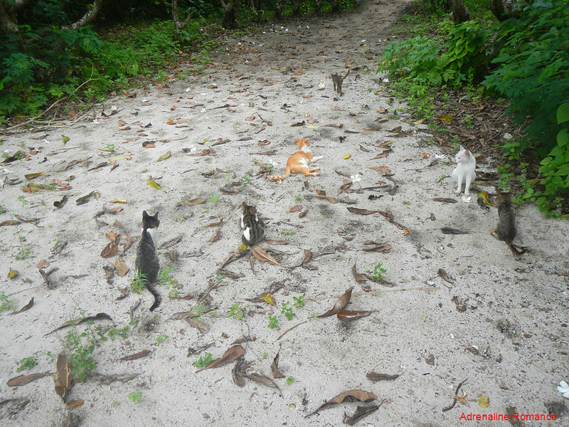 Mysterious resident cats
