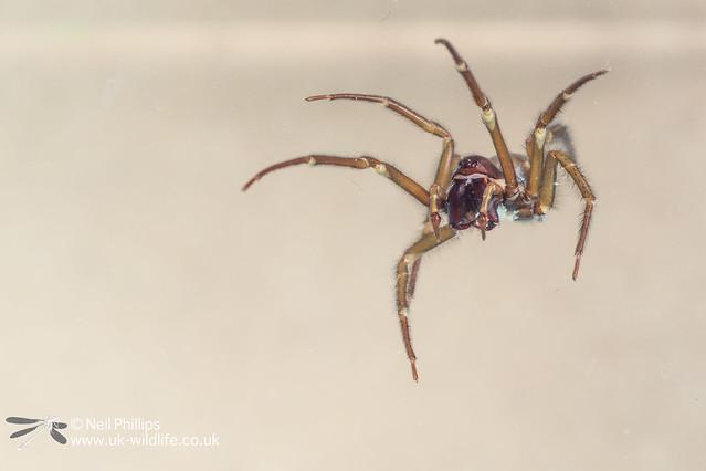 Water spider-3