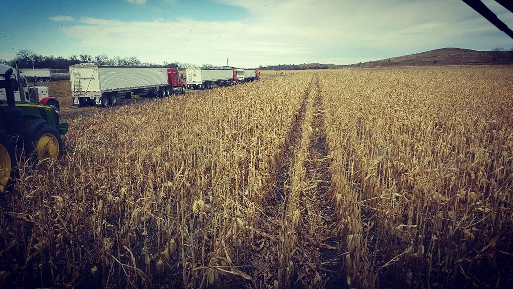 Schemper 2017 - Dry Corn Harvest