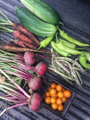 Plan Your Vegetable Garden for Continuous Harvest, Feb. 3, 2018