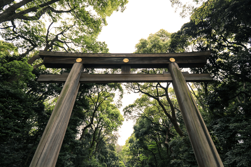Torii gate at Meiji Jingu Shrine