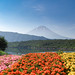 Fujisan...Mont Fuji ..Japan Unesco site by geolis06