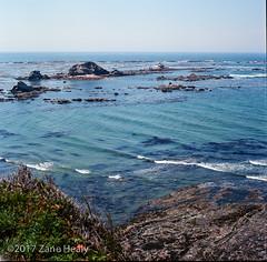 Seals off Cape Arago
