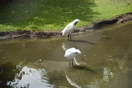 Chester Zoo (547)