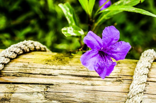 Purple flower MK
