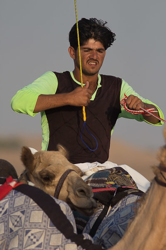 Urging on the camel