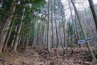 最初はヒノキ樹林