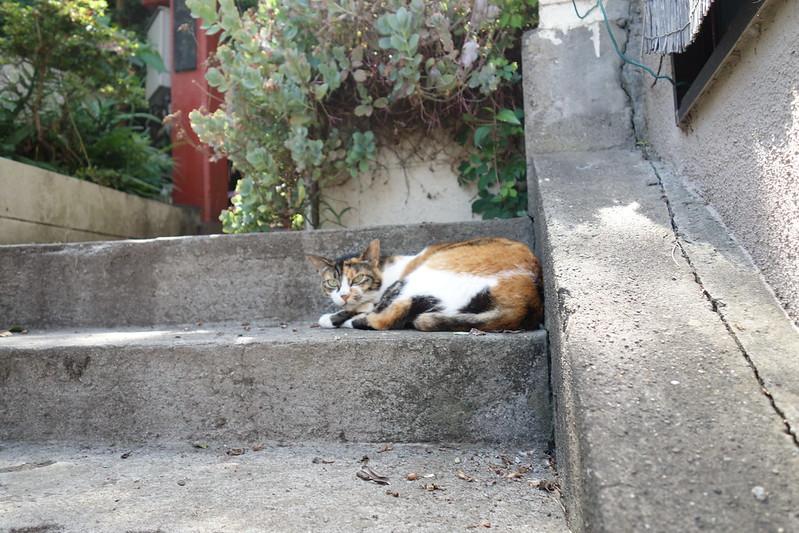 a cat @Enosihma, Fujisawa City