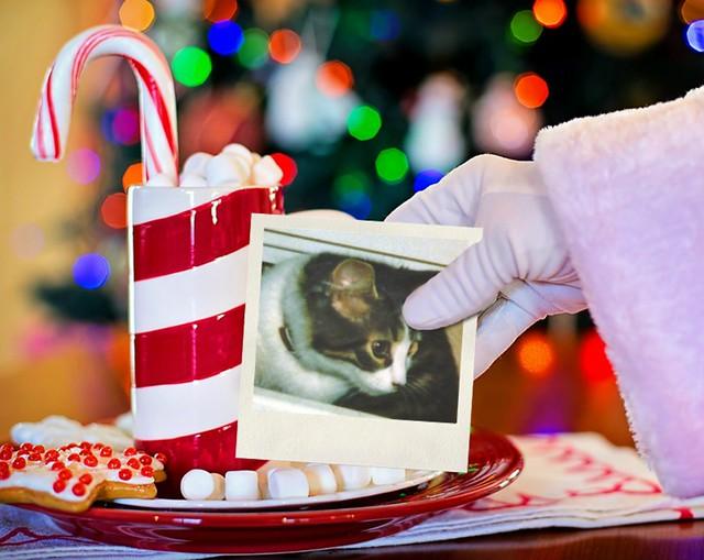 Baby Mitzi Exploring In Santa's Hand