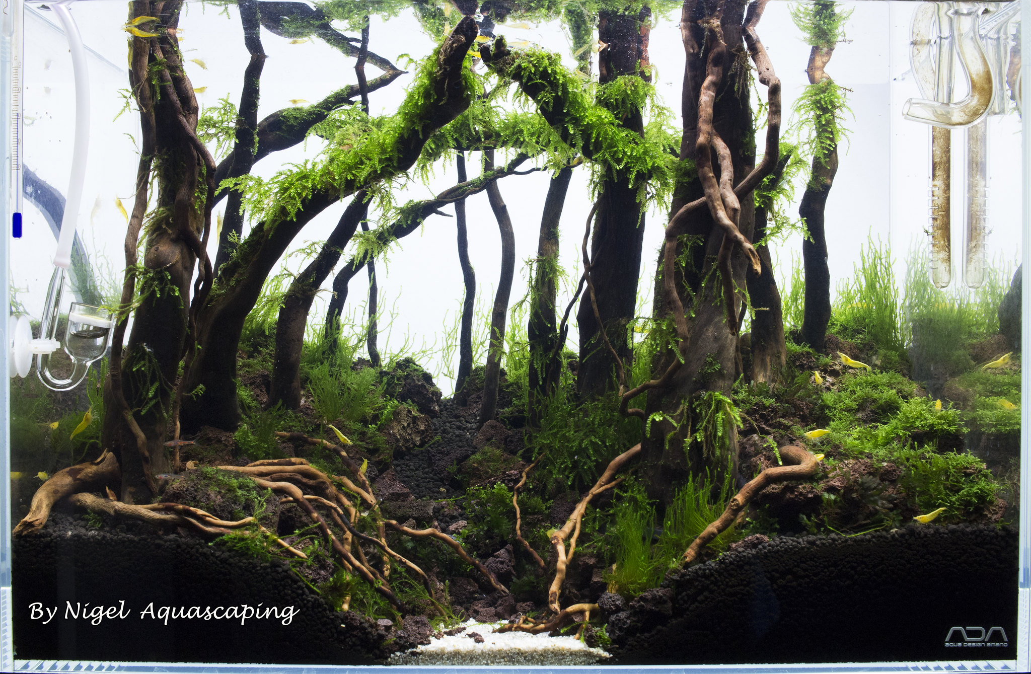 ADA 45P Forest aquascape - Aquarium Advice - Aquarium ...