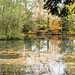 20171118-06_Autumn Colours - Pond - Baddesley Clinton