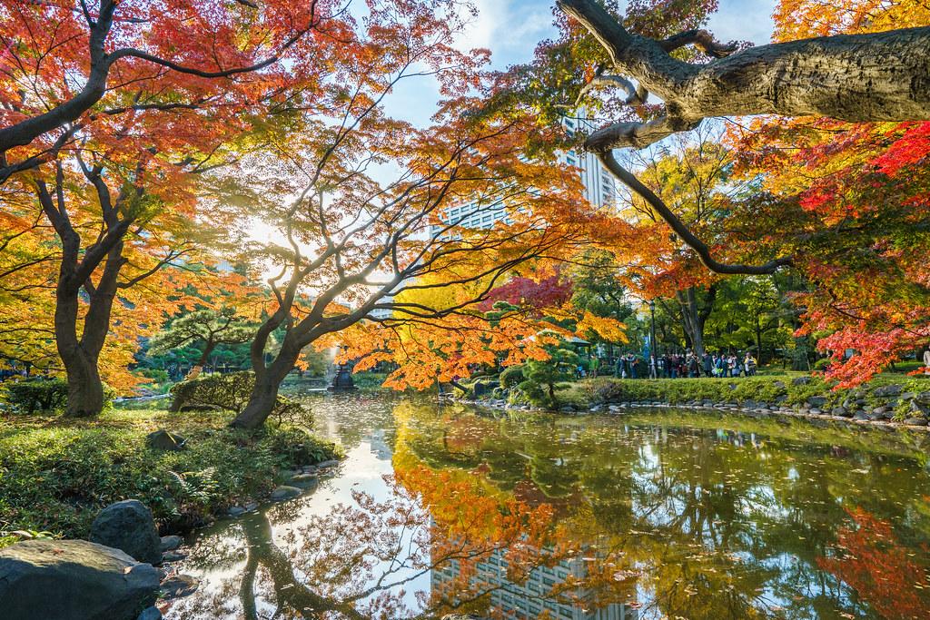 Autumn has come