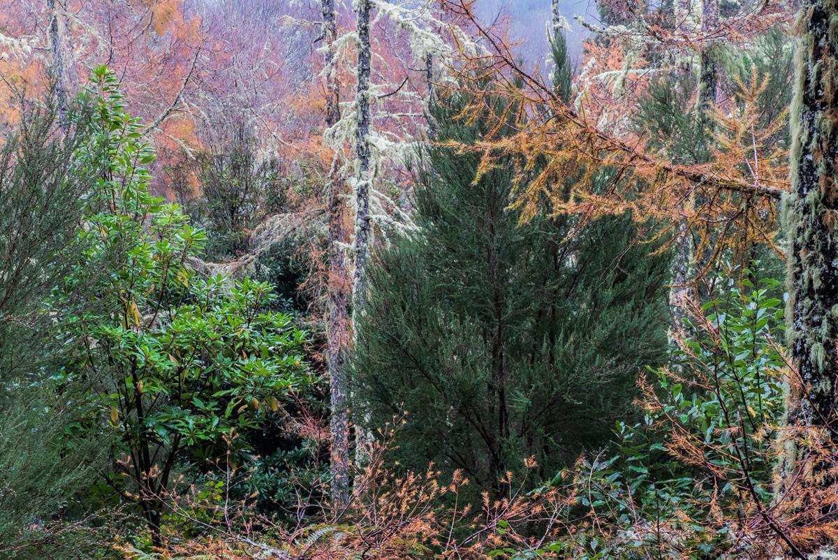 Причудливый-лес_DSC09500