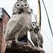 Owls_75616